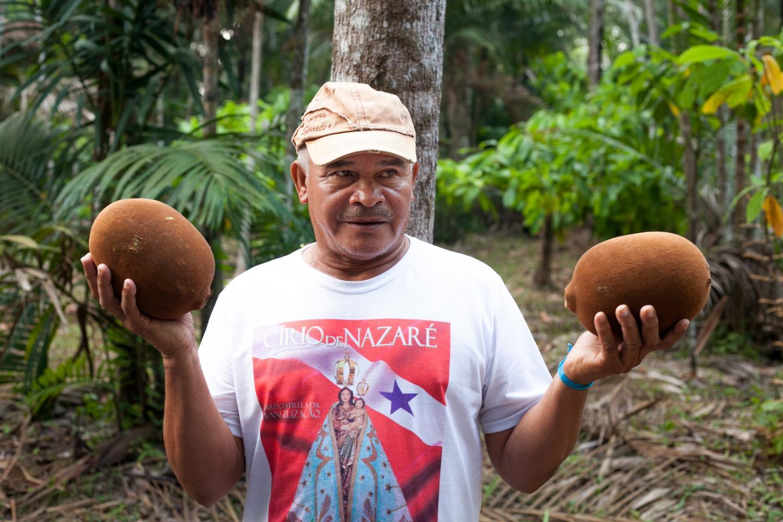 Cupuaçu bio, beurre de cupuaçu, agro foresterie, amazonie
