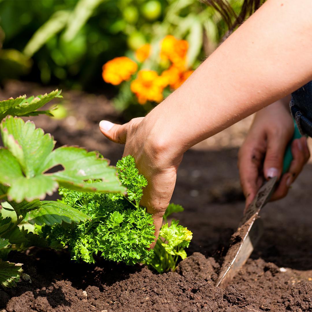 plantation, semis, jardiner