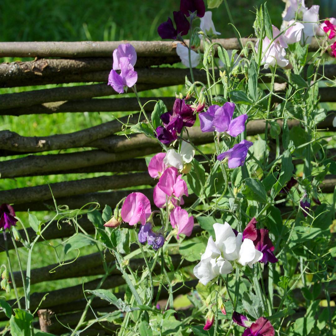 boostez la croissance et la floraison