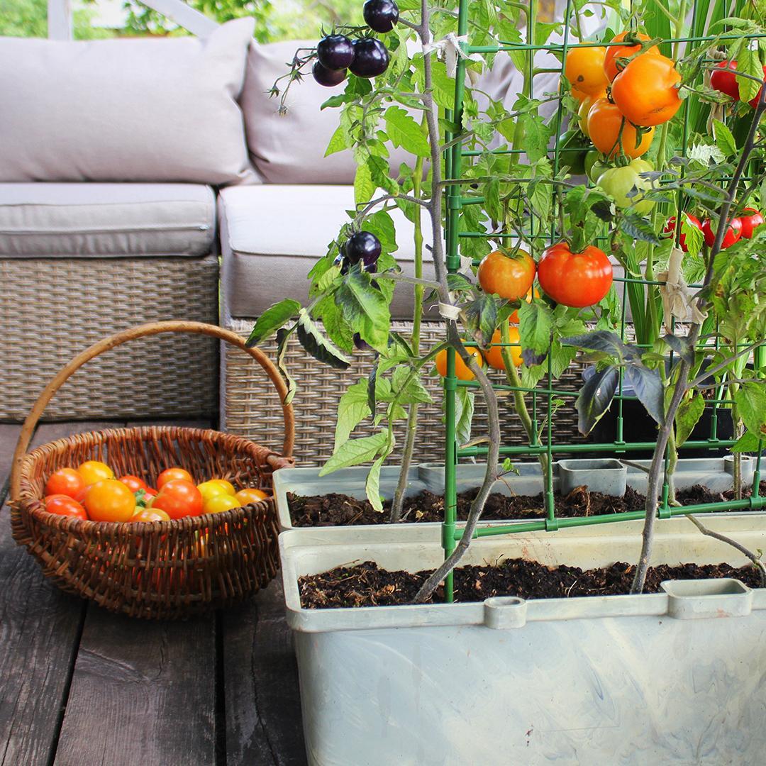 potager sur terrasse, semer sur des petites surfaces