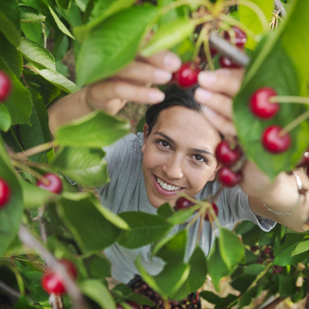 fruits rouges antioxydant pour la belle peau