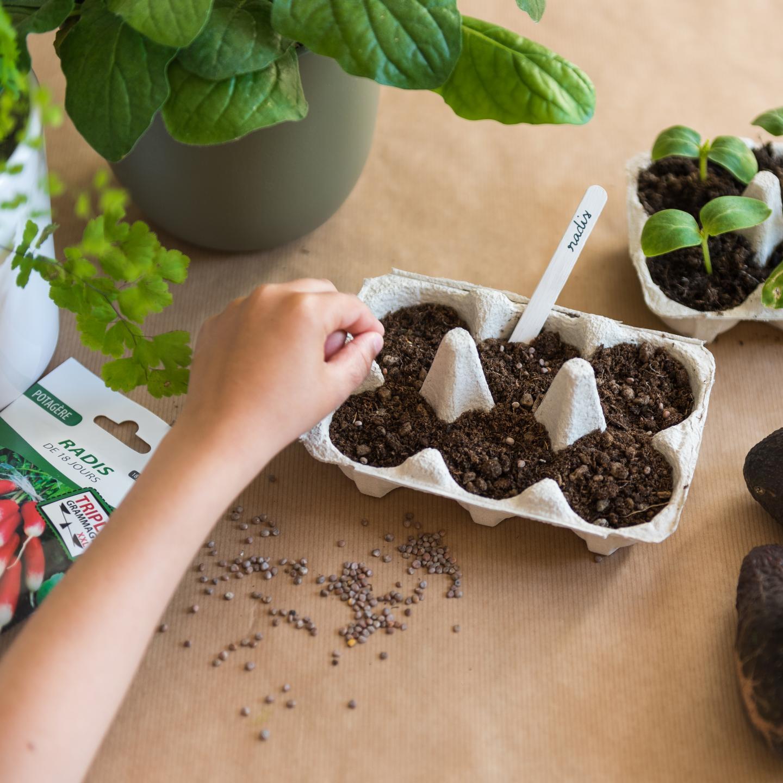 Semis, recycler les boites à oeufs
