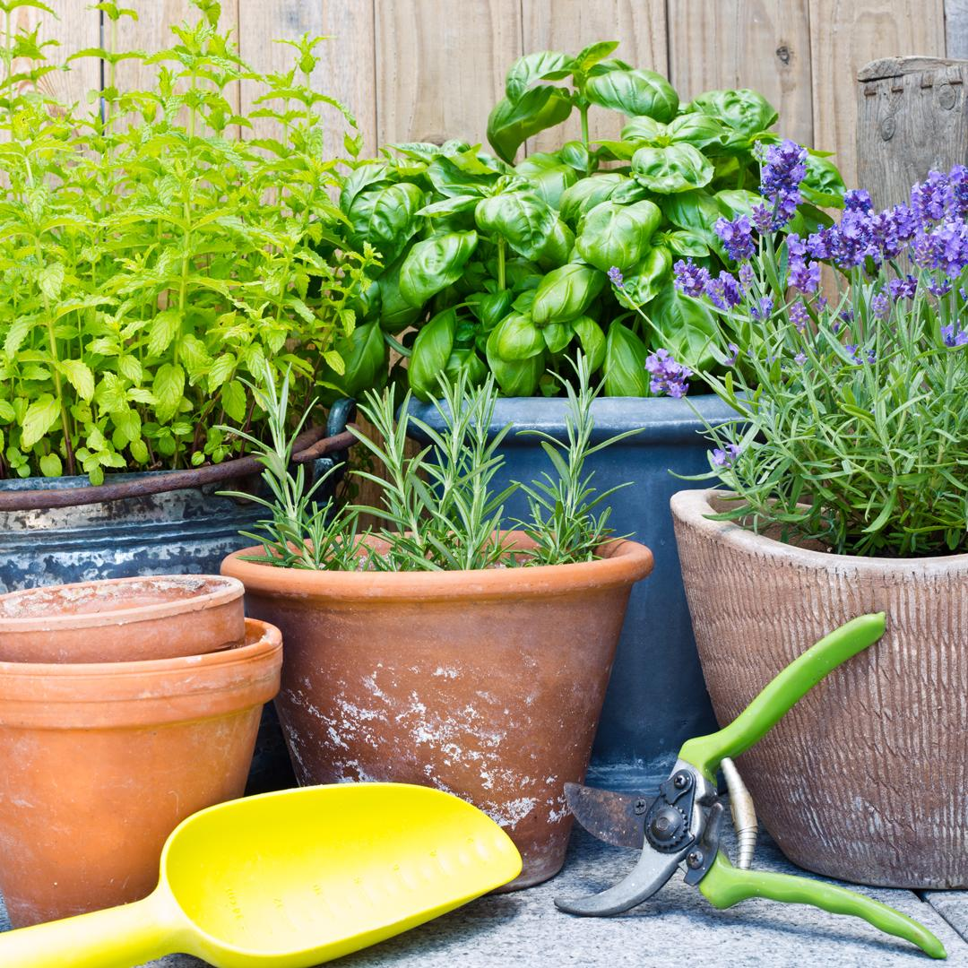 Avoine bio pour le jardin engrais