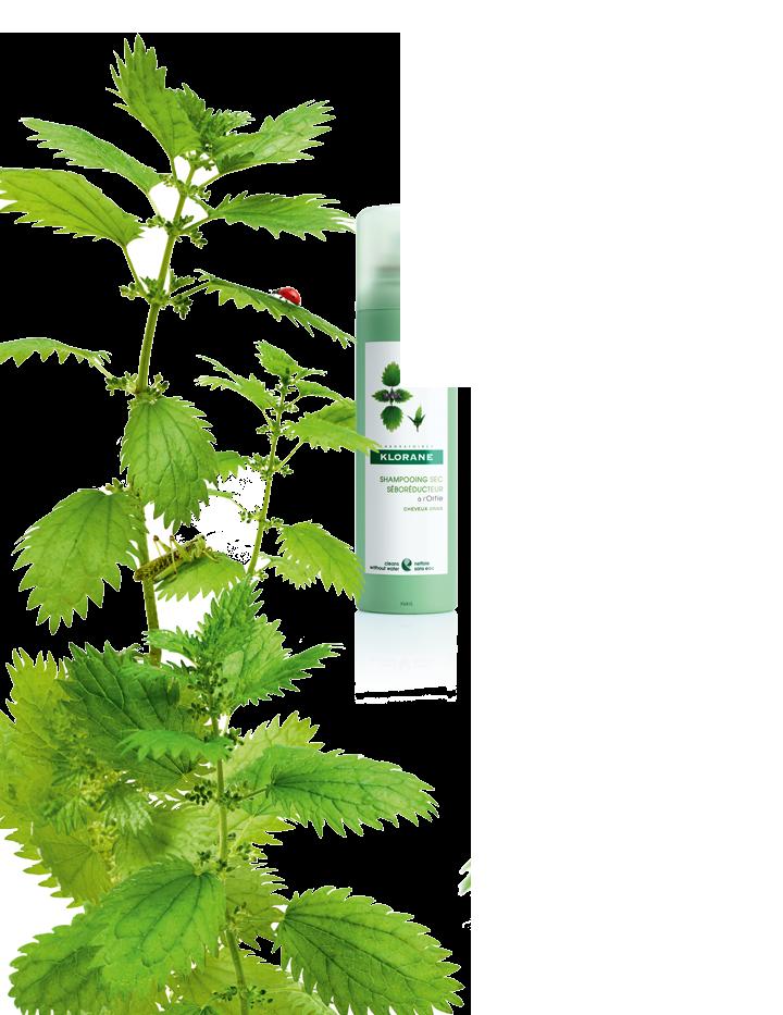 nettle-botanical-left_-new.