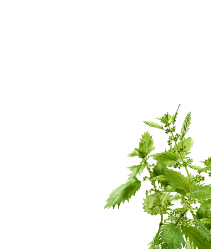 nettle-range-upper-right-new