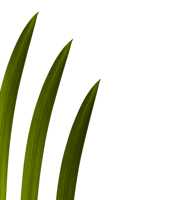 papyrus-sedge-home-middle-left.png