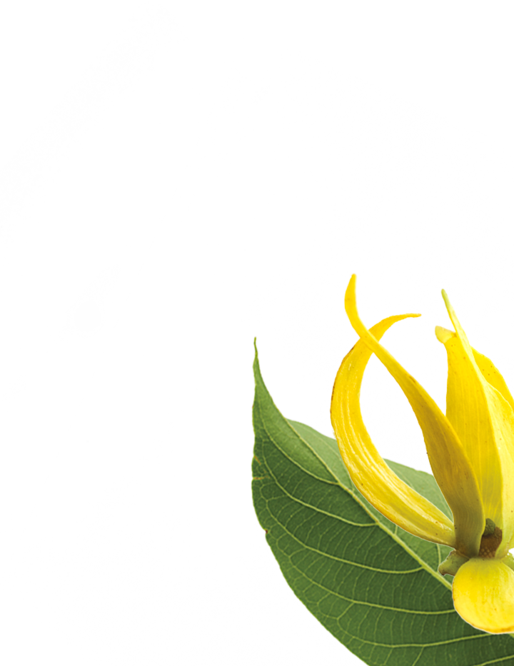ylang-botanical-right.png