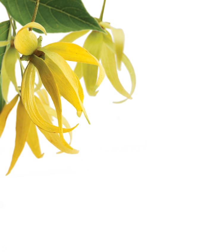 ylang-range-upper-left.png
